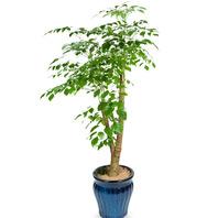 해피트리 행복나무 (칼라분)