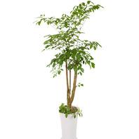 행복나무(개업.최다판매)20%할인가