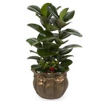 공기정화식물 고무나무