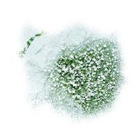 하얀눈꽃처럼