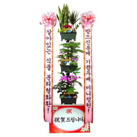 분리형 미니정원//3~4일전 예약상품