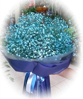파랑 안개꽃다발