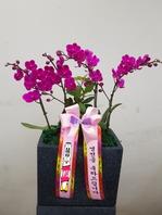 만천홍 직사각블랙분(배송상품)