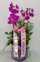 만천홍k2(꽃4대)