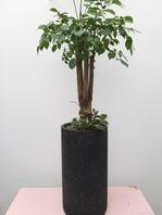 행복나무 롱 블랙분