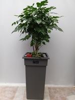 신종 녹보수k5(대박나무)