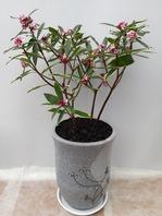 철리향(향기가 굿~) 겨울~봄상품